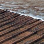 Rust – A Chronic Disease